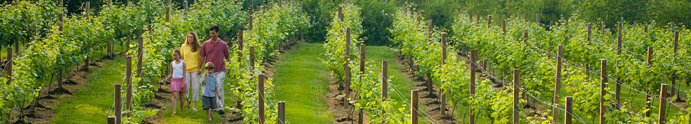 family_vineyard_1000